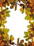fallen låter vara oaken arkivbilder