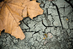 fallen leaf Arkivbild