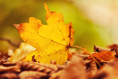 Free Fallen Leaf Stock Images - 27123944