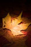 Fallen leaf royalty free stock photo