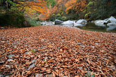 Fallen leaf. The color beautiful fallen leaf everywhere is, autumn came.The photography place is the Chinese Sichuan Nanjiang County's Mt. Guangwu Stock Image