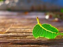 fallen leaf Arkivfoto
