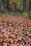 fallen leaf Arkivbilder