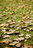 Fallen leaf Stock Images
