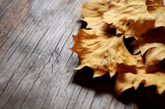 Fallen leaf autumn seasonal time fallen in table Stock Photos