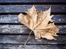 Fallen leaf on a bench Stock Photo
