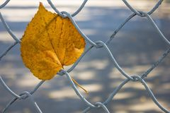 The fallen leaf. Royalty Free Stock Photography