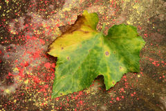 Fallen leaf on colored  floor Stock Photography