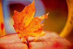 Fallen leaf Stock Image