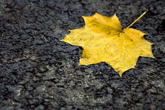 Fallen leaf on a concrete background Royalty Free Stock Photo
