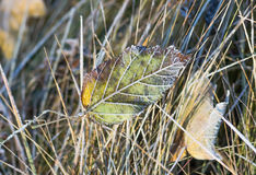 Fallen leaf covered with frost Royalty Free Stock Images