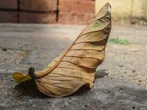 Fallen Leaf Details Stock Photos