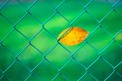 Fallen Leaf on Fence Royalty Free Stock Image