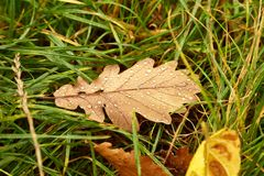 Fallen leaf on the ground Stock Photo