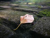 The fallen leaf lying on the ground royalty free stock images