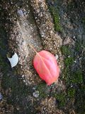 The fallen leaf lying on the ground Stock Images