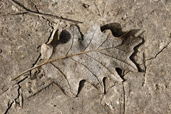 Fallen leaf on muddy background Stock Photos