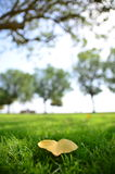 Fallen Leaf Stock Photography
