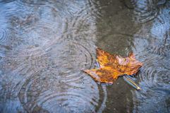 Fallen leaf Royalty Free Stock Images