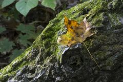 Leaf on mossy log stock images