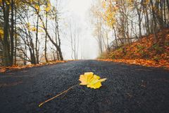 Fallen leaf on the road Royalty Free Stock Photo