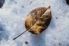 Fallen leaf Stock Photos