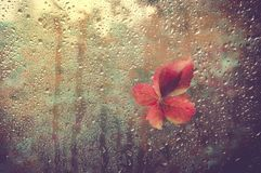 Fallen leaf stuck to the window that gets wet from rain drops. Warm look out the window for autumn. Cozy window with autumn leaves. Season and weather concept stock images