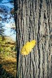 Fallen leaf on tree trunk Stock Image