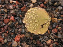 Raindrops on yellow leaf on agates. Yellow fall leaf laying on wet aggets with droplets of rain Stock Image