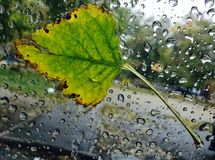 Fallen leaf on wet glass horizontal Royalty Free Stock Photos