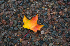 Fallen Leaf on Wet Gravel Royalty Free Stock Images