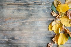 Fallen leaf wooden background autumnal dry foliage stock photos