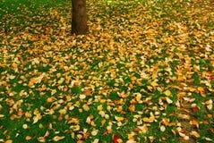 Fallen leafs Royalty Free Stock Photos