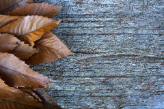 Fallen leafs in autumn. Space to write. Wooden table. Background Stock Image