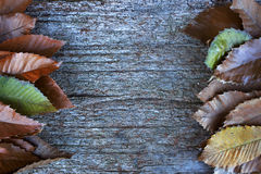 Fallen leafs in autumn. Space to write. Wooden table. Background Stock Photos
