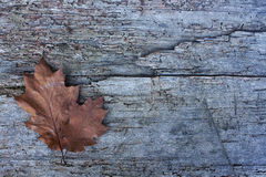 Fallen leafs in autumn. Space to write. Wooden table. Background Royalty Free Stock Photography
