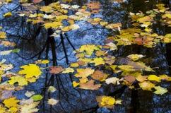 Fallen leafs stock image