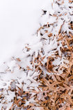 Fallen leafs and snow during winter time Royalty Free Stock Image