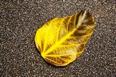 fallen leafyellow Arkivbilder