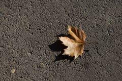 Fallen leave Stock Image