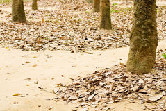 Fallen leave on soil Royalty Free Stock Photos
