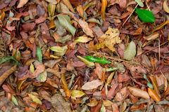 Fallen Leaves Royalty Free Stock Photo