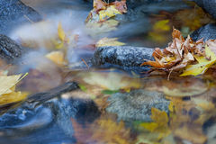 Fallen Leaves. Leaves in river during fall/autumn Royalty Free Stock Image