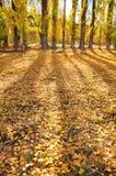 Fallen leaves. Beautiful yellow, shadow & fallen leaves Stock Photography