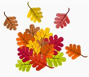 Fallen leaves Royalty Free Stock Image