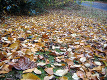 Fallen leaves. Leaves on the ground royalty free stock photography
