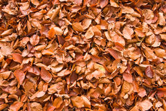 Fallen leaves. Fallen autumn leaves, intended as background or wallpaper Stock Images