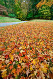 Fallen Leaves. Wide view of fallen autumn leaves on the grass Royalty Free Stock Photography