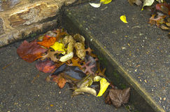 Fallen leaves accumulate on steps of stone stairs. Stock Photo