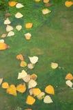 Fallen Leaves on Algae Stock Photo